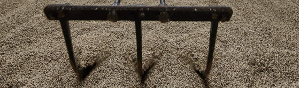 Picture of maltings floor with a rake in the malt