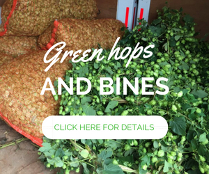 Button to click through to Green hops and bines for collection at the Charles Faram HopWalk